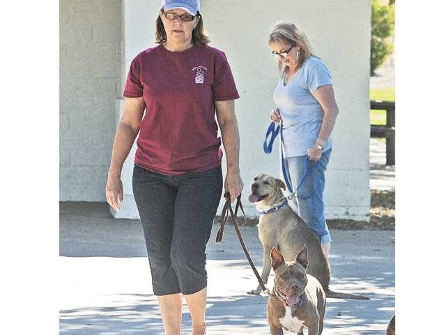 Kyle Harris, left, her dog Kara and Yvonne Allbee and Jack at the Canine Good Citizen Class at Central Park in Saugus. All of the dogs in the class were rescued pit bulls or pit bull mixes. Harris helped rescue animals in a dramatic incident in the Antelope Valley in 2008.