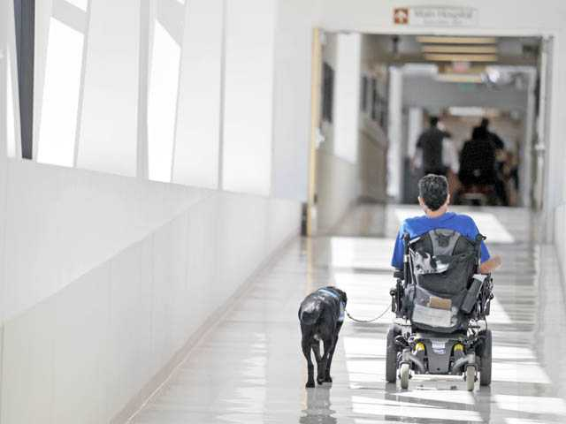Logan, a Labrador retriever, walks with his owner, hospital volunteer Marc Richards, at Henry Mayo Newhall Memorial Hospital in Valencia on Monday. (Jonathan Pobre/The Signal)