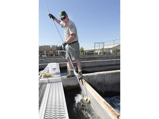 Andy Heape of the California Department of Fish and Game cleans a fish screen on one of the salmon holding tanks at the Nimbus Fish Hatchery.