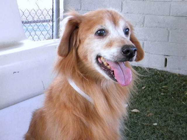 Jake (A411687) is an absolute doll in need of a guardian angel for his golden years.