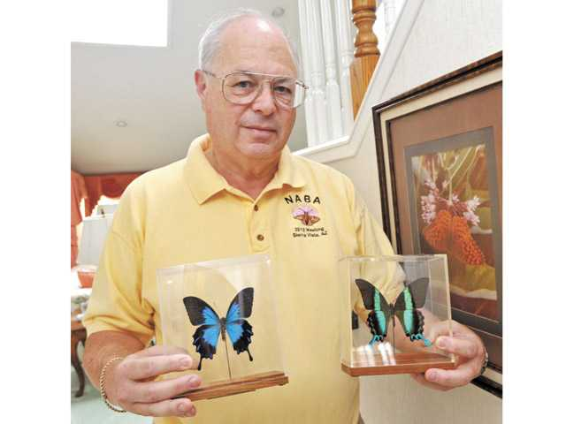 Paul Levine with a Ulysses butterfly, left, and a green swallowtail butterfly that he procured at a crafts fair.