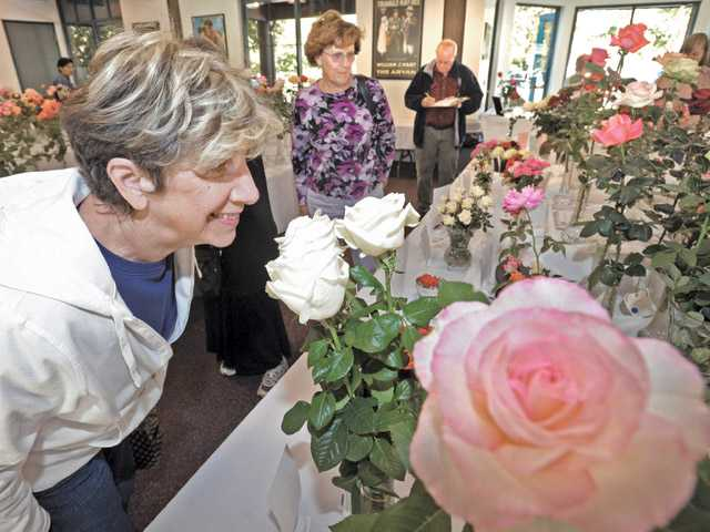 Barbara Oliver, of Newhall, enjoys the fragrance by sniffing one of the 500 roses on display at the 2011 Rose Show.