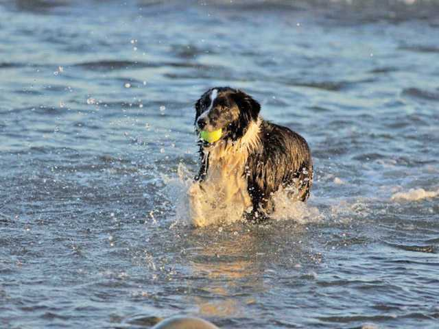 The dangers of saltwater to pets