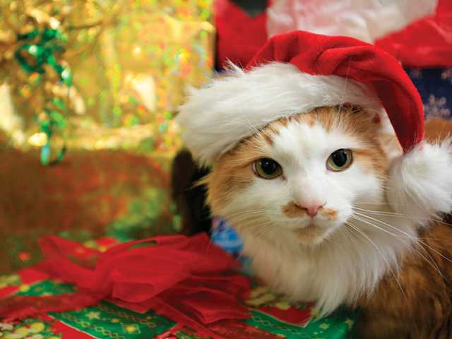 Make sure your pets have a healthy and happy holiday season by following some common sense rules.