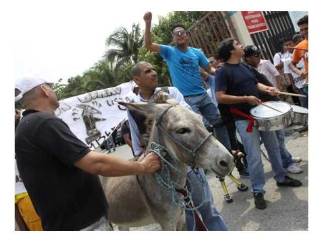 "People lead a donkey named ""Mr. Donkey"" to the National Electoral Council in hopes of registering him to run for a seat on the National Assembly in Guayaquil, Ecuador, Thursday, Nov. 15 2012. Daniel Molina, leader of the Mr. Donkey support group, said his group's goal was to raise awareness among voters about the seriousness of the National Assembly elections and the importance of choosing effective candidates."