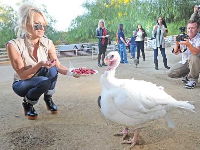 Pamela Anderson visits fowl friends at Gentle Barn off Sierra Highway