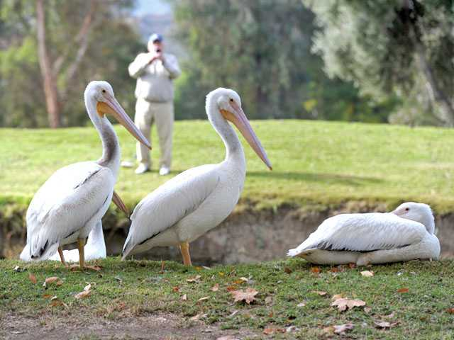 Pelicans make stop at Valencia golf course