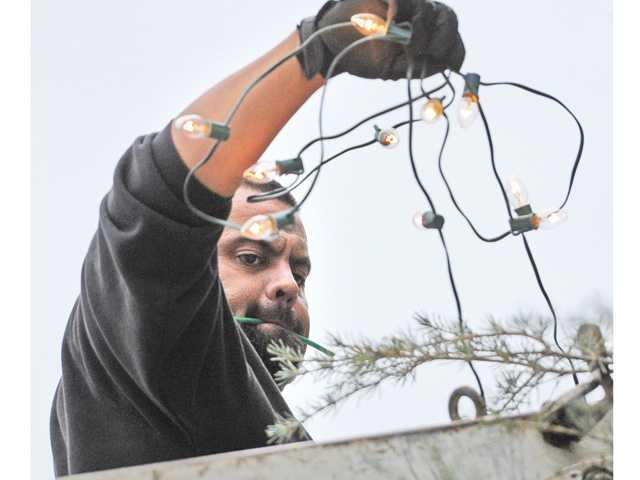 Andy Gump employee Manny Hernandez, standing in a cherry picker, untangles one of the 150 strands of lights that will light the tree.