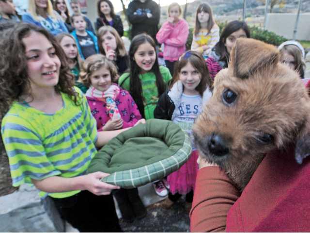 Rebecca West, left, and a group of third, fourth and fifth grade students from SCVi present a dog bed on Thursday to a Terrier Mix puppy that is housed at the Castaic animal shelter.