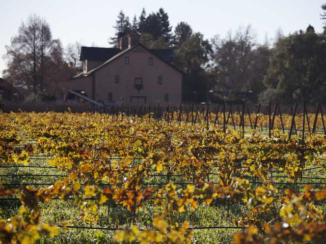 Massive Napa do-over prompts grape plant shortage