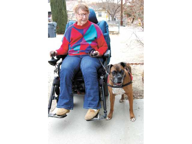 Military veteran Doris Moffitt, 65, of Frazier Park, interacts with her service dog Duke, a rescued boxer who is trained to help the disabled senior with daily tasks.