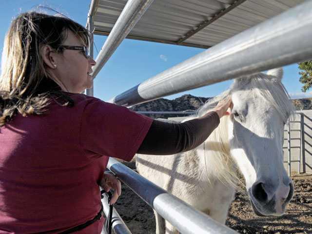 Storey visits Lady, a gray Arab horse, at the shelter.