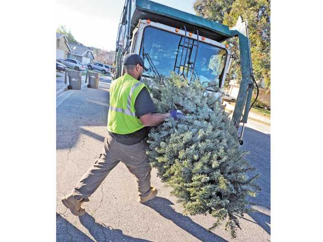 Laboror Eric Wayne loads a Christmas tree onto the lift of the Waste Management for recycling on Evergreen Lane in Saugus on Wednesday.
