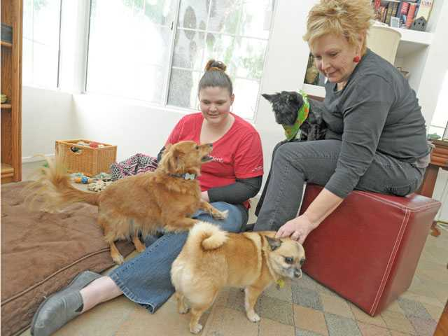 Mary and Sue Brown play with, from left, Copper, Chloe and Crush in their Canyon Country home on Thursday. The two have been DogVacay.com hosts since August 2012 and have hosted eight different dogs, some which have come back to their home multiple times.