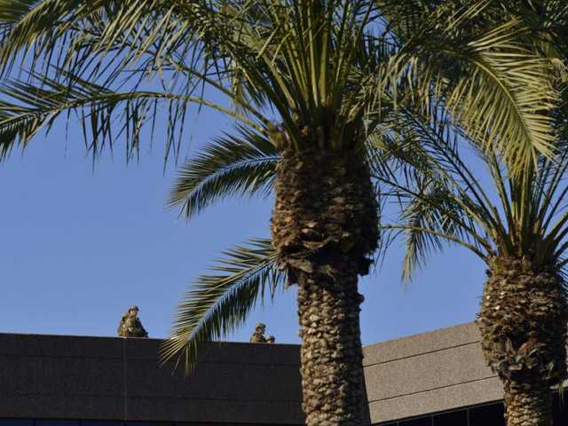 Police: 1 dead in Ariz. shooting, suspect on loose