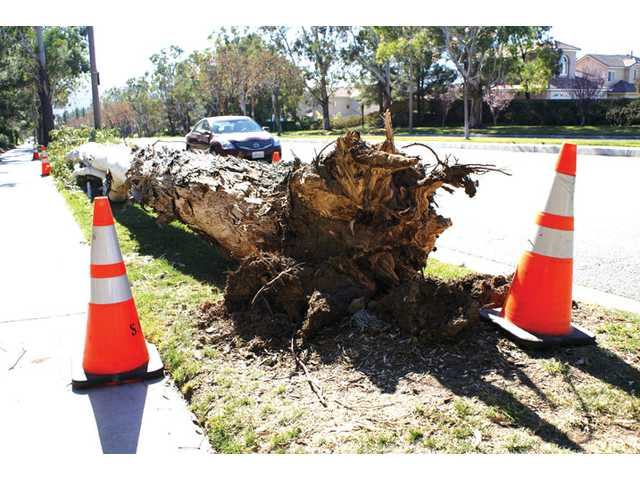 A 30-foot tree fell over on McBean Parkway just south of Northpark Drive. Weather experts say they believe winds will recede by late Monday.