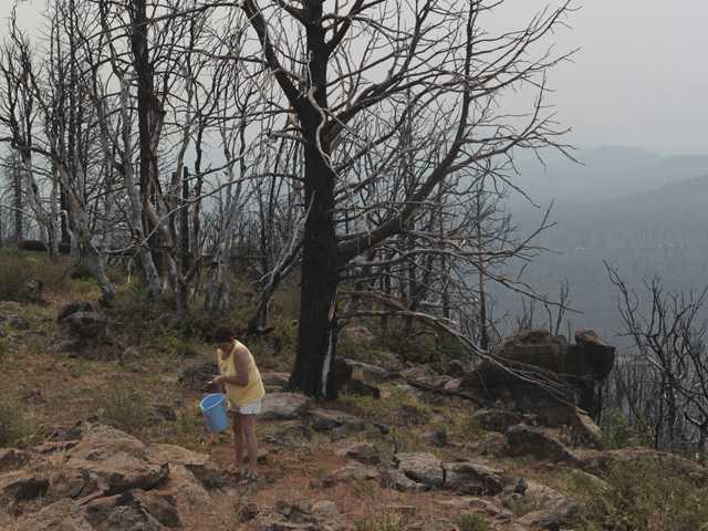 Tina Seidler of Redding, Calif., waters saplings planted at the Hat Creek Rim Overlook as smoke from the Reading Fire and other fires in the area obscure Lassen National Park. (AP)