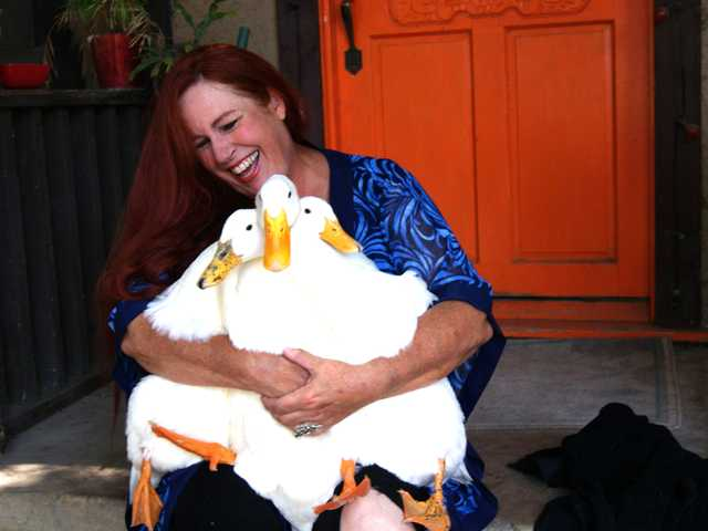 In this July 22, 2012 photo provided by Lydia Yasuda, Carol Chrysong founder of The Lucky Duck Rescue & Sanctuary in Los Angeles holds pekin ducks at the sanctuary in Sun Valley.
