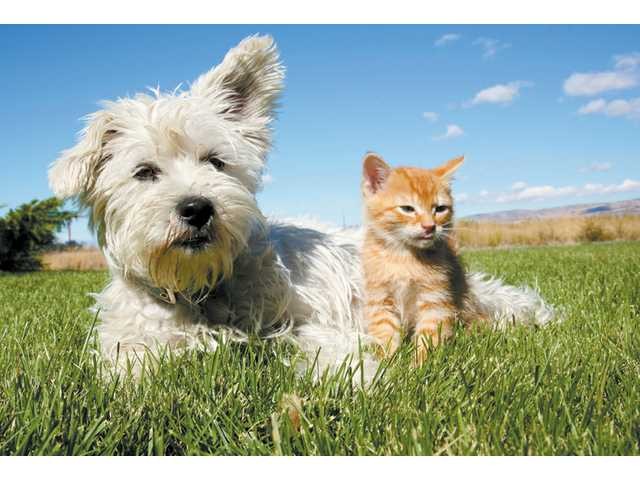 Growing grass, blooming flowers and blossoming plants signal the start of spring across the Santa Clarita Valley. The season has been known to trigger environmental allergies not just in people, but for their pets, as well.