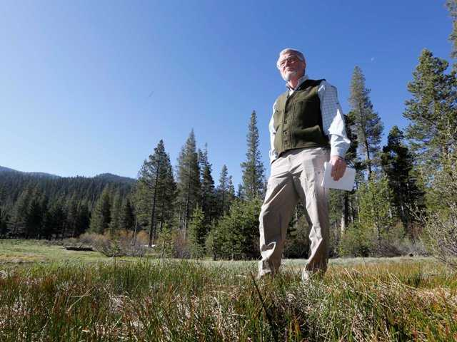 Frank Gehrke, chief of snow surveys for the Department of Water Resources, walks across a grassy meadow that is usually covered in snow as he conducts the final snow survey of the year at Echo Summit. Calif., on Thursday. The California snow survey showed the water content in the snowpack at 17 percent of norma.