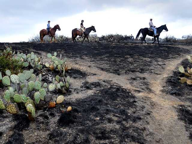 Horseback riders pass the burned area of the Santa Monica Mountains National Recreation Area in Newbury Park. Firefighters are mopping up in the Springs fire.