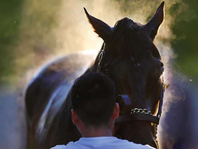 Kentucky Derby winner Orb stands as he is cooled down after a workout at Pimlico Race Course in Baltimore, Friday, May 17, 2013. The Preakness Stakes horse race is scheduled to take place May 18.