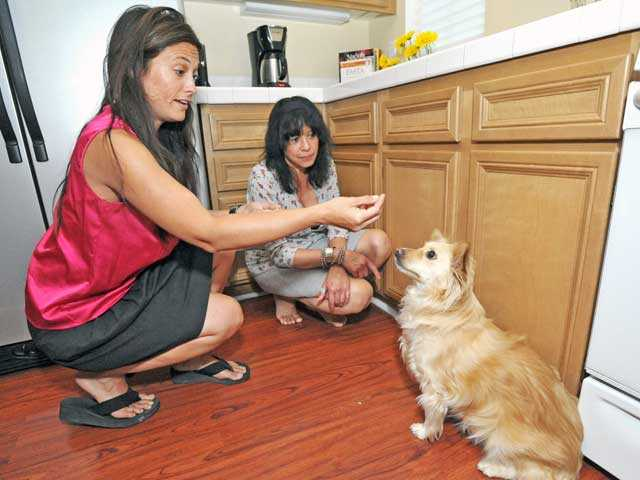 Jennifer Gray, left, and SueAnn O'Connor work on a sit command with O'Connor's dog LuLu.