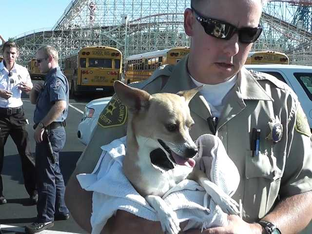 A sheriff's deputy cradles a dog in his arms after the animal was locked in a car in the Magin Mountain parking lot for six hours. Courtesy photo by Louis Gallardo