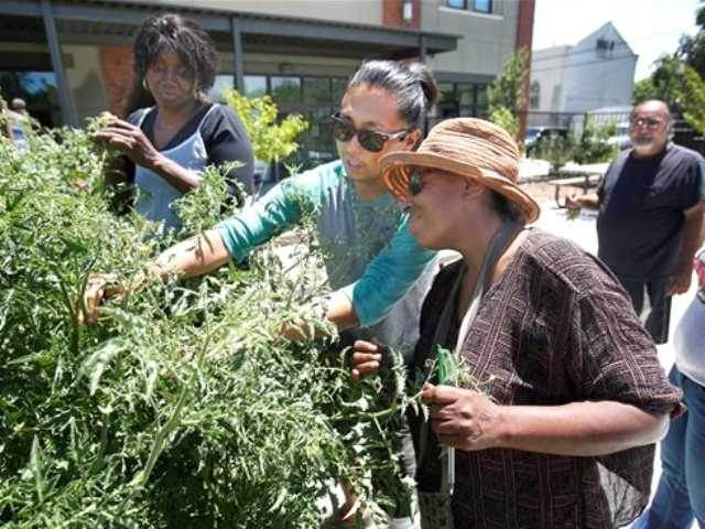In this photo taken Tuesday, June 11, 2013 Greg Norrish, left, shows Laura Poree how to care for tomato plants during a home gardening seminar at the Sacramento Food Bank in Sacramento.