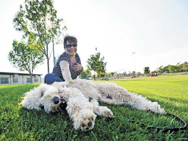 Dale Baron, of Valencia, plays in the shade with her 11-month-old goldendoodle Twomey at Bridgeport Park in Valencia on Monday. Photo by Jonathan Pobre.