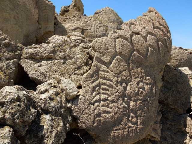 Ancient carvings on limestone boulders in northern Nevada's high desert. The carvings have been confirmed to be the oldest recorded petroglyphs in No. America.