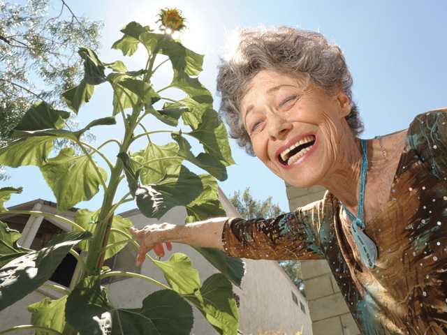 Valencia Lakeshore Condominiums resident Sandi Cates has enjoyed watching her 11-foot-tall sunflower grow. Signal photo by Dan Watson