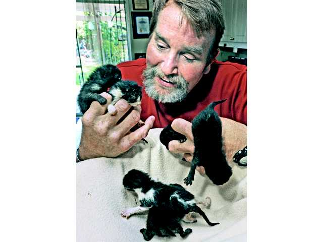 Rick Kerr is nursing six kittens back to health at his Saugus home after they were left in a Dumpster at the Castaic Industrial Center on Monday. Signal photo by Dan Watson