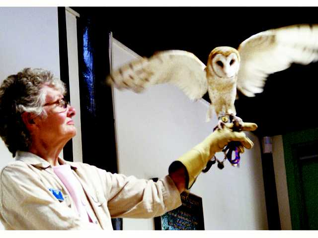 Placerita Canyon Nature Center docent Linda Ioerger displays a barn owl during the center's Sunday's Community Nature Education Series talk about raptors in the Santa Clarita Valley. Signal photo by Jim Holt