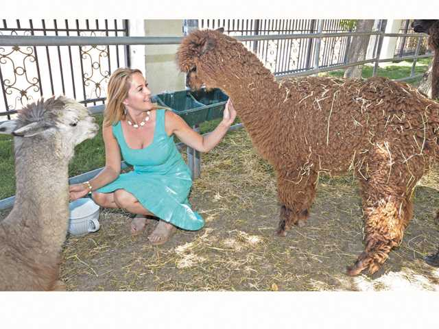 Erin Murphy sits with alpacas Bella, left, and Moorea at home on Tranquil Veranda Ranch in Santa Clarita.