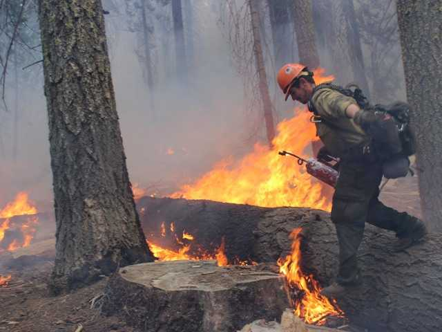 There is no that the Rim wildfire began by an illegal marijuana grow. Above, a firefighter walks near a burn area near Yosemite National Park on Sept. 1.