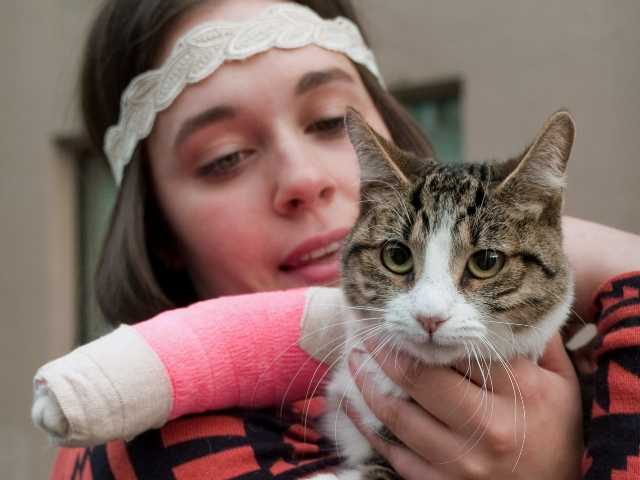 Stephanie Gustafson holds her two-year-old female cat, Wasabi. The cat survived a fall from the 11th floor of a building after chasing a mosquito out the window.