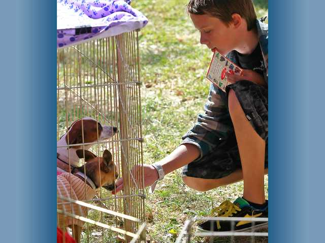 Bryce Downey, 13, of Canyon Country pets some puppies put up for adoption at the Sunday event. Photo by John Lazar.