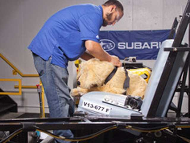 Subaru and the Center for Pet Safety in Virginia collaborated on a crash test study. A MGA Research Corp. staff person preps test dog for a crash test.