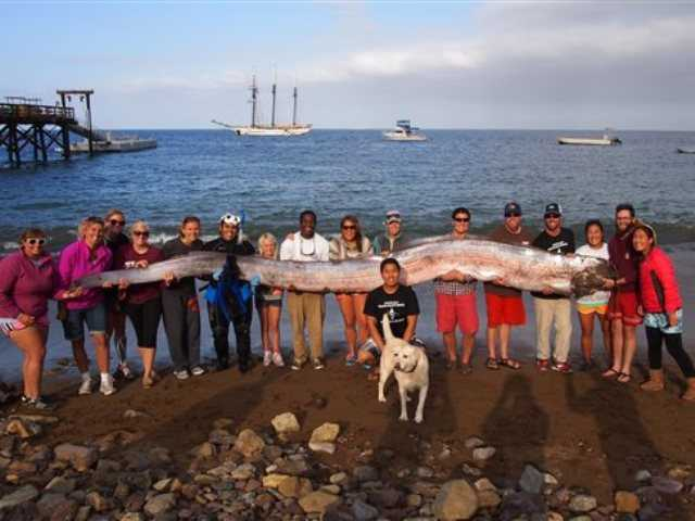 New 14-foot 'sea serpent' found in Southern Calif.