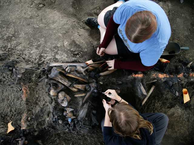 Laura Tewksbury, top, and Karrie Howard excavate more than 42,000-year-old bison fossils with dental picks at the La Brea Tar Pits on Wednesday in Los Angeles.