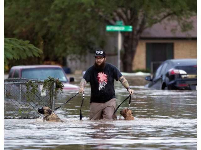 A man walks through flood waters in Austin, Texas on Quicksilver Boulevard with two dogs after heavy rains brought flooding to the area in southeast Austin, Texas, on Thursday.