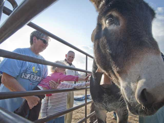 Visitors pet Josephine, the single donkey accompanying 100 mules from Independence - near Mammoth Lake - to Sylmar for the 100th anniversary of the Los Angeles aqueduct opening. The mules enjoy the sound of the bell Josephine wears around her neck. Photo by Charlie Kaijo.