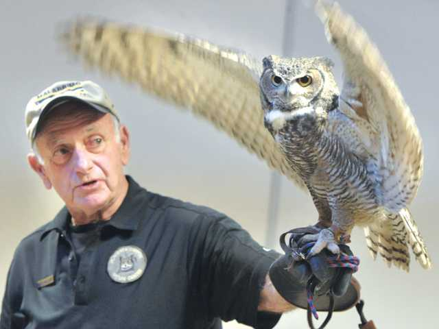 Orion the horned owl flaps it's wings as docent and naturalist Roger McClure describes how the design of the birds' feathers make it almost silent in flight while hunting.