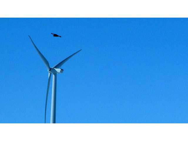 This April 18 file photo shows a golden eagle flying over a wind turbine on Duke energy's top of the world wind farm in Converse County Wyo.