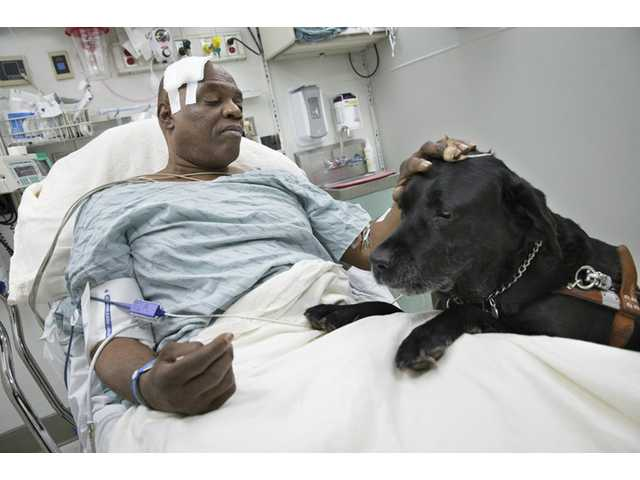 Cecil Williams pets his guide dog, Orlando, in his hospital bed following a fall onto subway tracks from the platform Tuesday in New York.