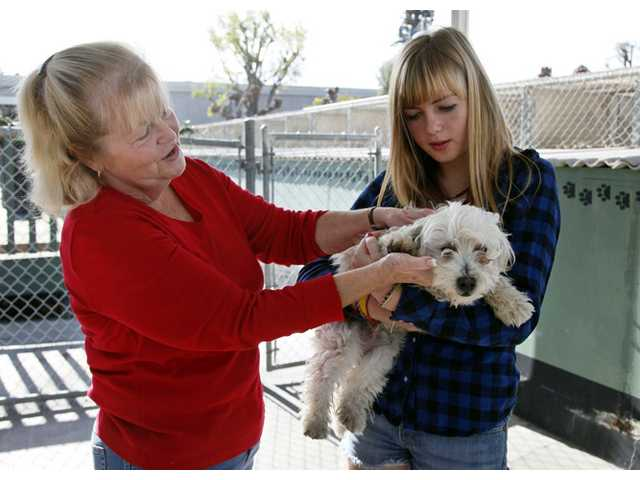 Carol Adams, left, and her daughter Michelle look into adopting a dog at the OC Animal Care shelter in Orange on Tuesday.