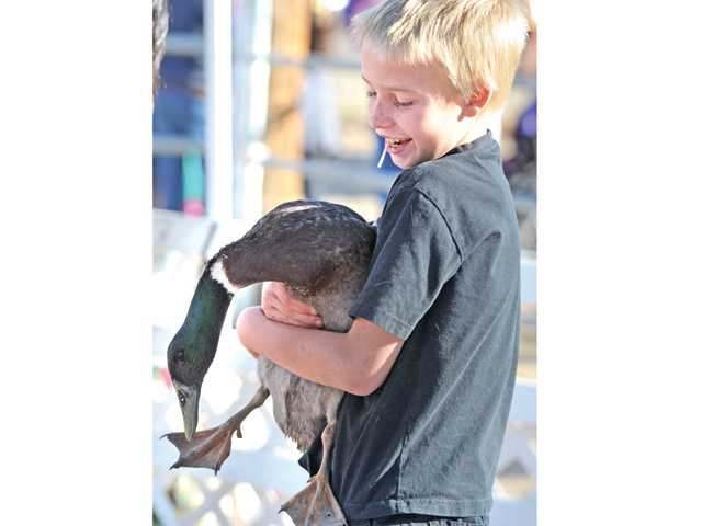 Michael Kerr, 10, lifts a duck at the Santa Day event at Carousel Ranch on Saturday.