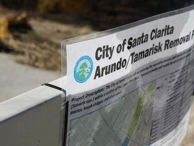 A sign posted by Santa Clarita city workers details the city-contracted removal of arundo and tamarisk in the Santa Clara River wash. Signal photo by Jim Holt