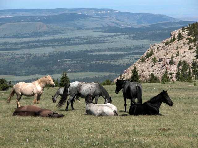 Resumption of commercial horse slaughter in the U.S. was blocked on Friday. Above, wild horses are seen on the at the Pryor Mountain National Wild Horse Range in Montana.